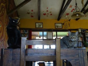 Cats in dinner room
